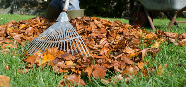 Indiana fall lawn care tips - Autumn lawn care advice ...
