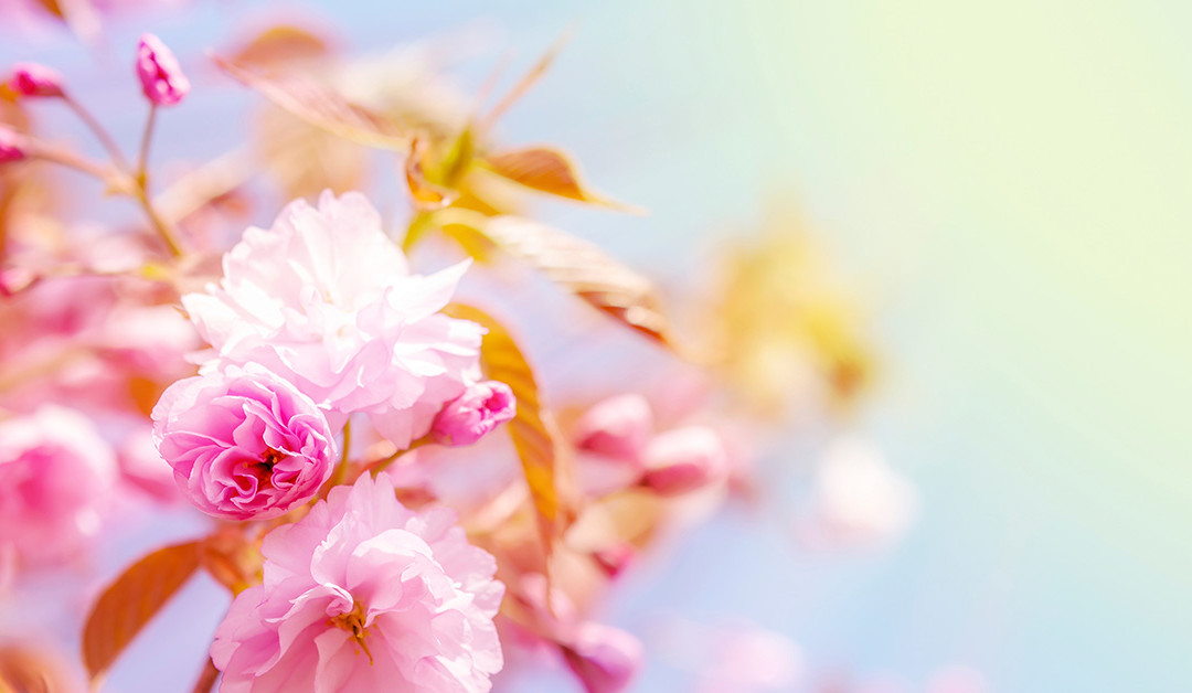 Spring has Sprung! 6 Steps for Preparing Your Home for the Warmer Weather